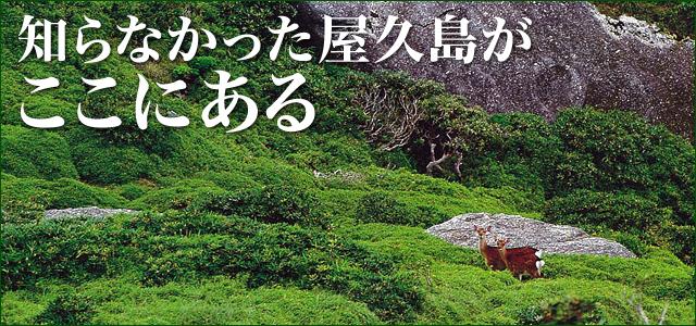 知らなかった屋久島がここにある。写真集はこちら